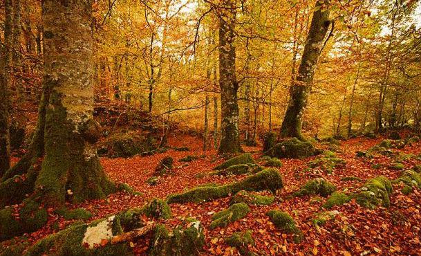 Senderos para el otoño