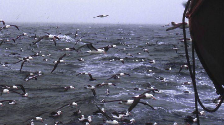 Albatros en la popa del Pescapuerta Cuarto.