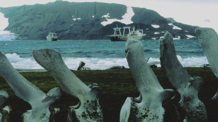 El Pescapuerta Cuarto y el Nuevo Alcocero frente a un esqueleto de ballena.