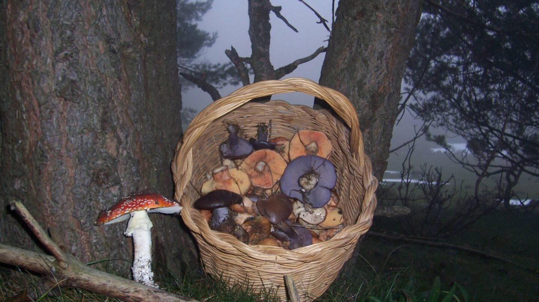 Las setas y los hongos se deben recoger con una cesta para esparcir las esporas por el campo.