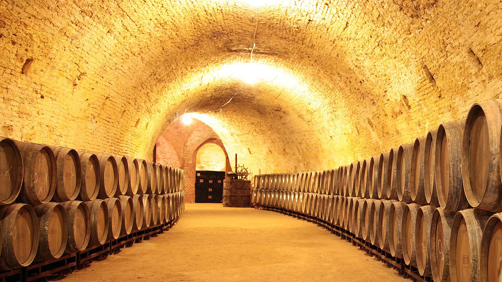 Bodega de Carlos III. La segunda galería, de menor longitud, se dedicó a la conservación de aceite. Las paredes de todo el subterráneo han tenido que ser limpiadas del encalado que pusieron al instalar en 1975 un cultivo de champiñones.