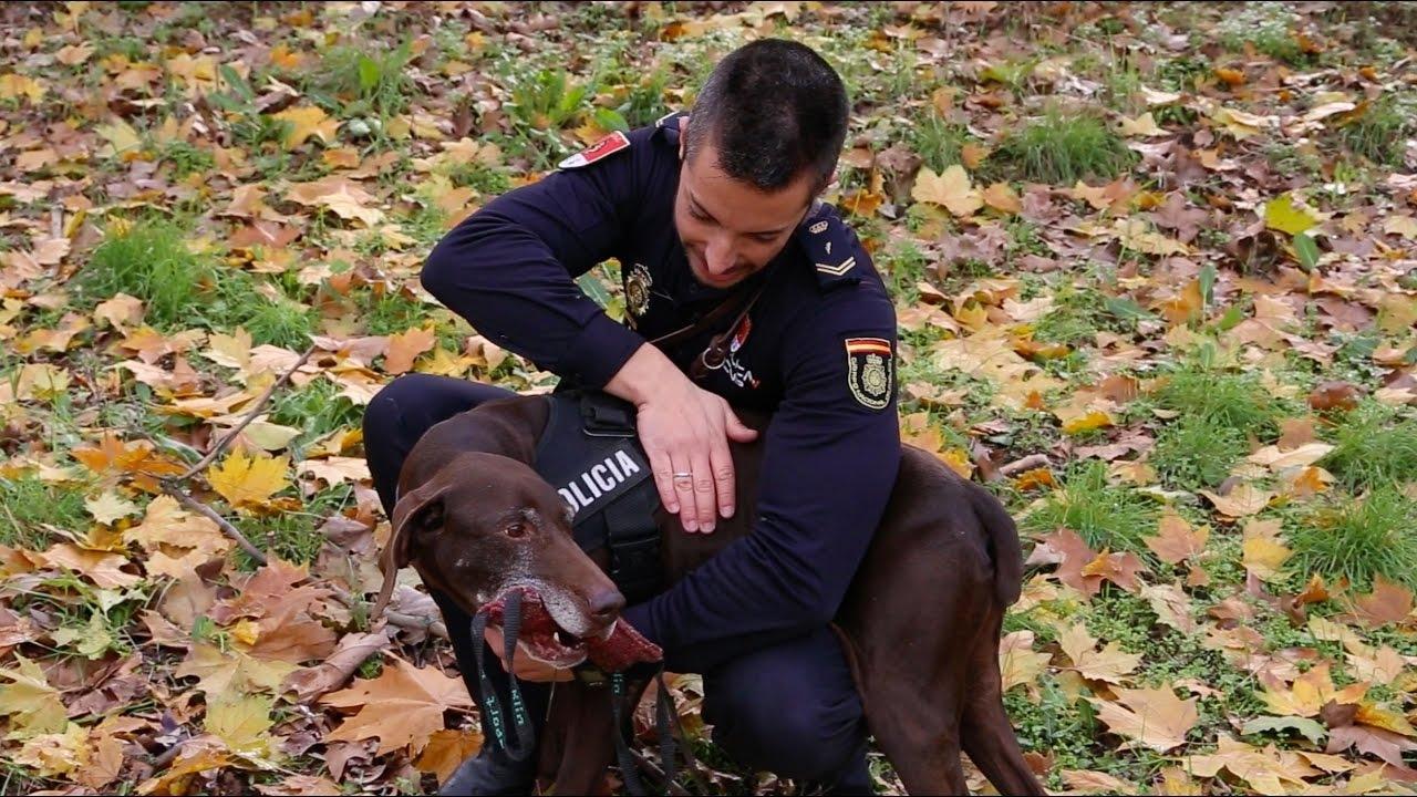 Bruss, perro de la Policía Nacional a punto de jubilarse