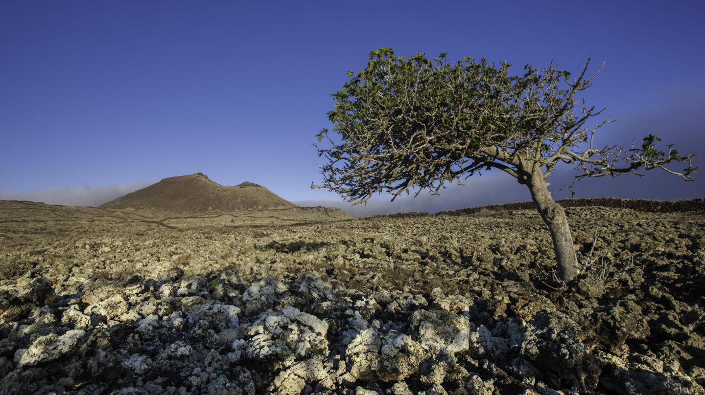 Un paisaje del interior de Fuerteventura.