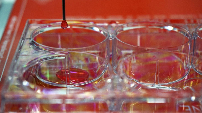 Un equipo de ciéntificos crea piel humana con una bioimpresora 3D.