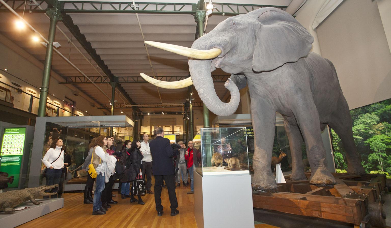 El Museo Nacional de Ciencias Naturales ofrece una visita guiada con picoteo al finalizar.