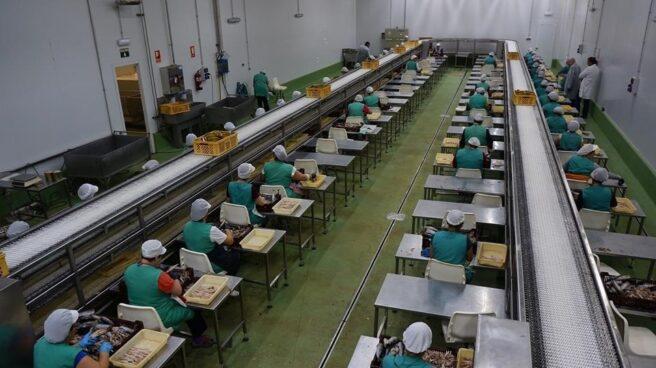 Trabajadoras en una empresa conservera.