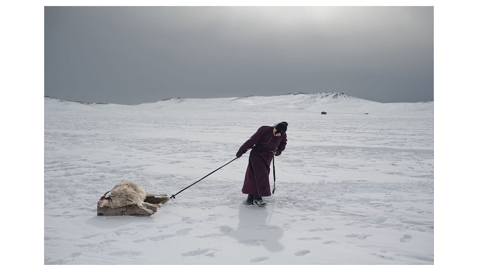 El trabajo de Grassani, encuadrado en una serie de diez imágenes, explora y transmite el impacto generado en la sociedad de Mongolia afectada por el cambio climático.