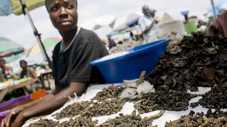 ión sobre un tema decisivo como es el futuro de la alimentación de nuestros descendientes. La ingesta de insectos es, según la FAO, parte de la dieta de 2.000 millones de personas.