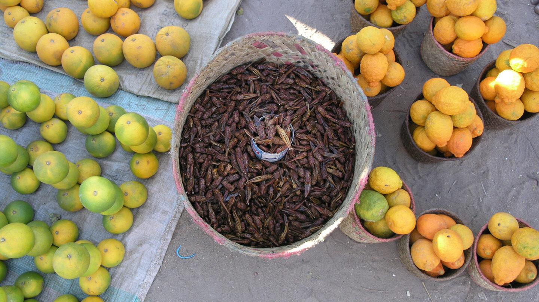 Langosta roja a la venta en Madagascar. Se quitan las alas y patas antes de poner en la sartén.