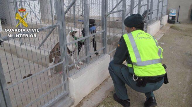 Agente de la Guardia Civil en una protectora de animales