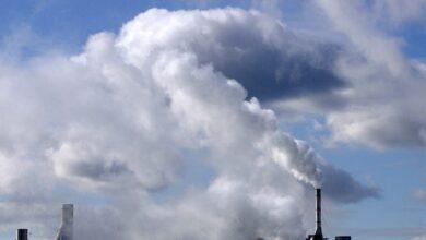 El Instituto Coordenadas recomienda solo los bonos de carbono con certificación oficial