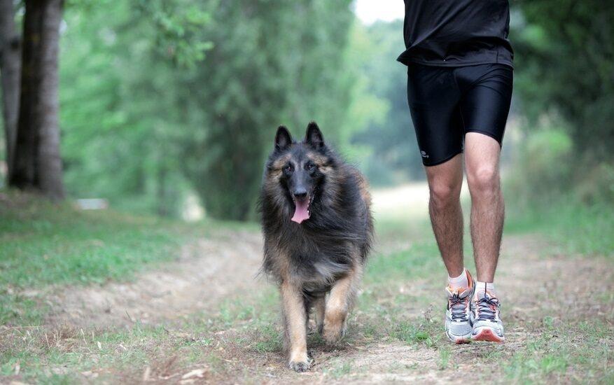 Perro y amo haciendo deporte juntos