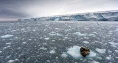 El hielo Ártico estuvo cerca del punto de fusión este invierno