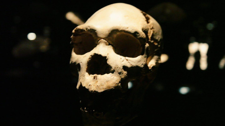 El cráneo de Miguelón.