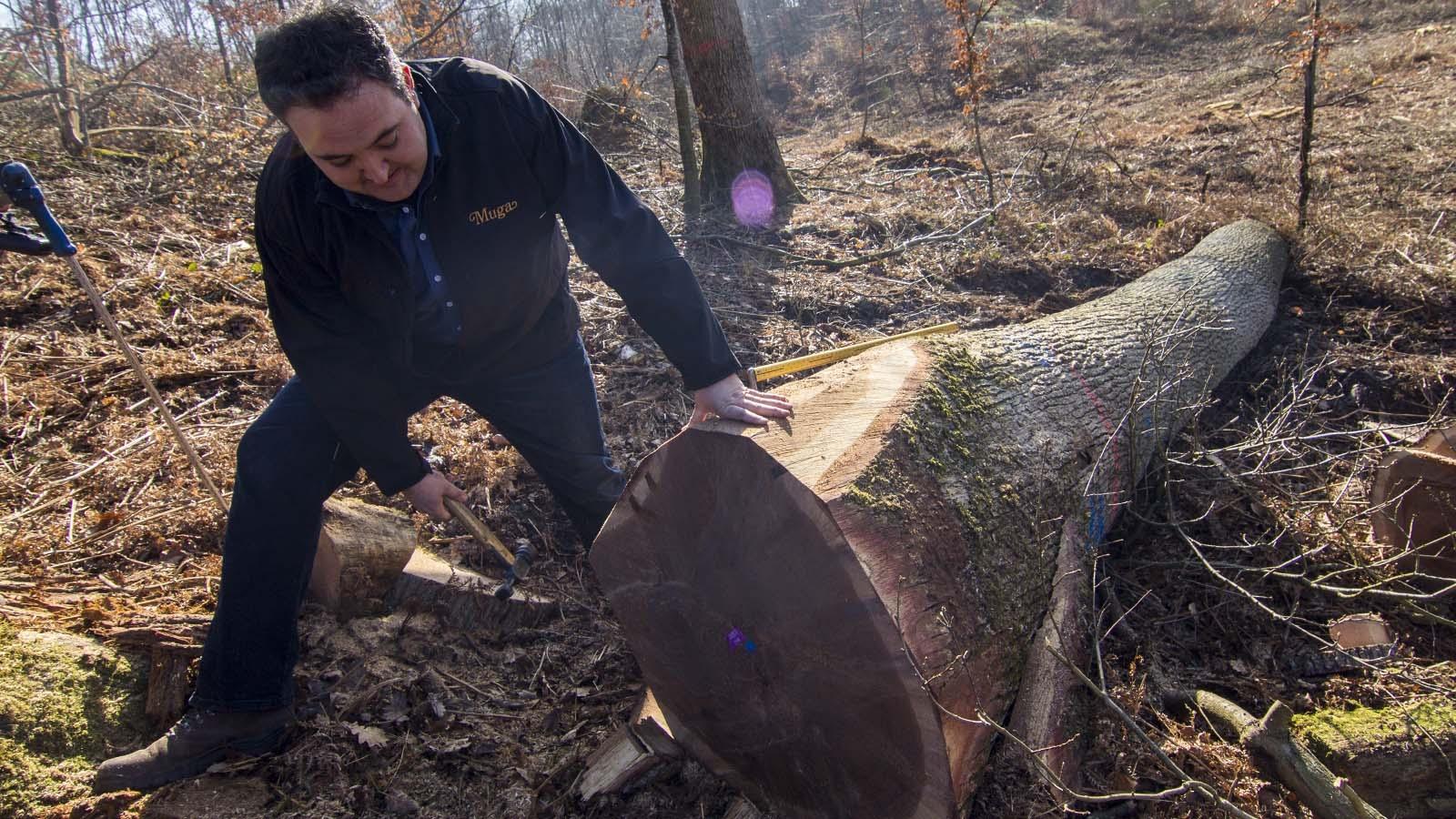 Isaac Muga sella un tronco recién cortado para asegurar su procedencia. (Foto: Rafael Ordóñez)