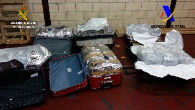 Incautan 40 kilos de angulas vivas ocultas en seis maletas con destino a China