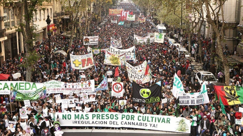 Podemos aboga por la regularización integral del cannabis por su impacto en la economía.