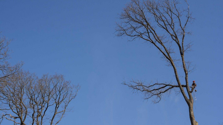 corte de ramas