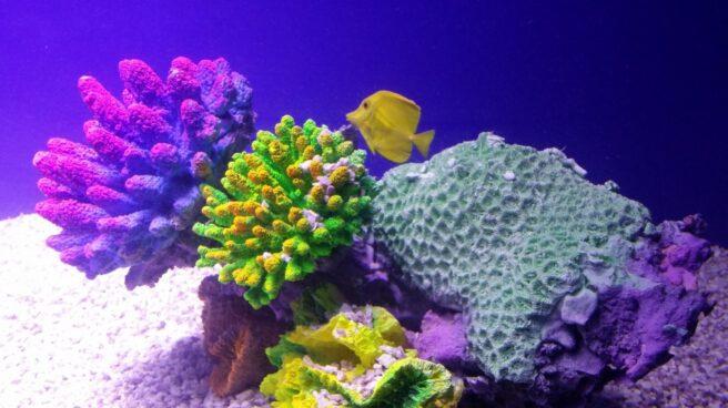 Del análisis de los corales se pueden desprender los diferentes cambios en el fondo marino.