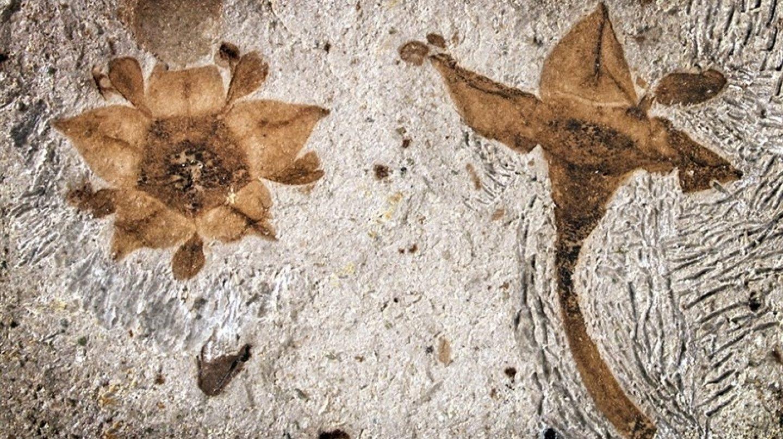 Las flores fosilizadas