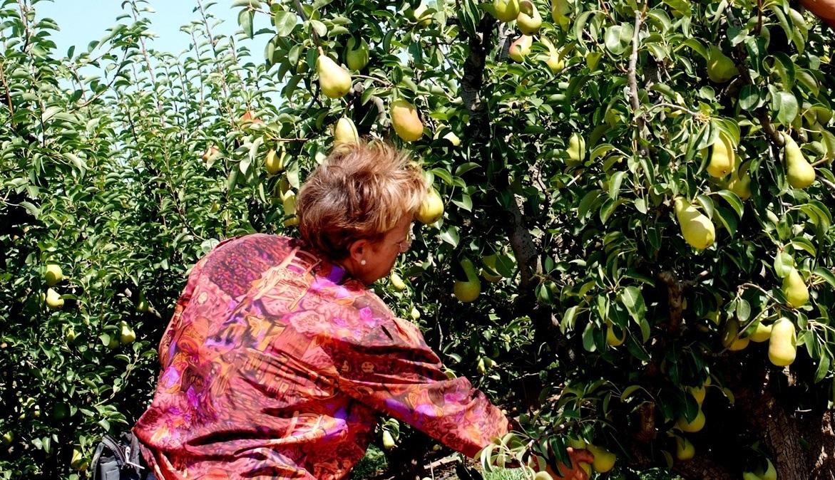 Se buscan abuelas que transmitan sus conocimientos ecológicos tradicionales
