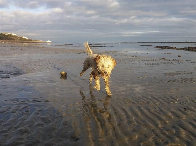 Un perro corriendo por la playa.