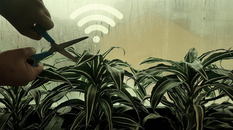 Plantas emiten señales químicas para avisar a sus compañeras