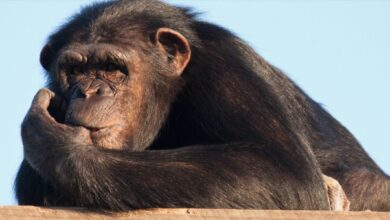 España, primera línea contra el tráfico de especies en peligro de extinción