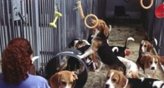 Perros usados para experimentación jugando con su cuidadora