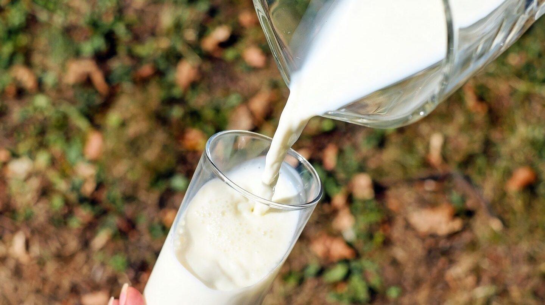 El consumo de leche entera no se asocia con un mayor índice de enfermedades cardiovasculares, como otros alimentos grasos.