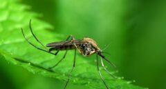 El mosquito tigre veranea en segundas residencias y piscinas hinchables