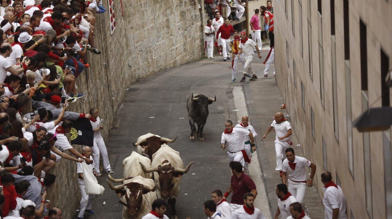 Toro rezagado de Escolar en el segundo encierro de San Fermín.