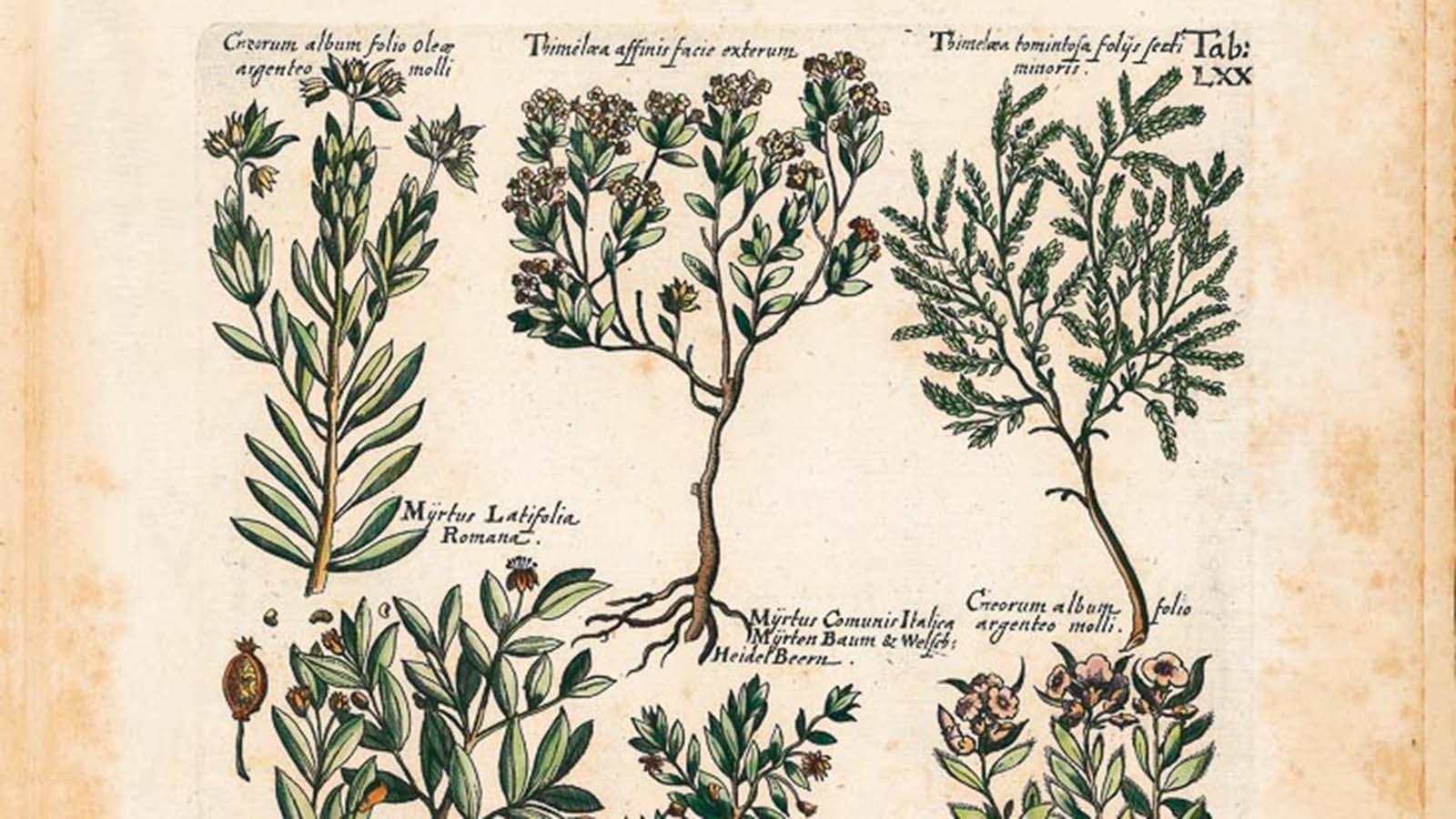 'Historia Naturalis de Arboribus et Fructicibus', de Johannes Jonstonus. Editado por Siloé, arte y bibliofilia.