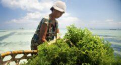 Algunas algas poseen 20 veces más nutrientes que muchos vegetales.