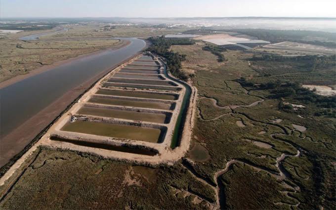 La empresa Huerta Marina es la única que cultiva algas en estanque terrestre en España.