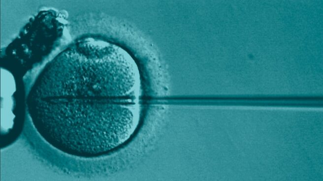 Proceso de fecundación in vitro.