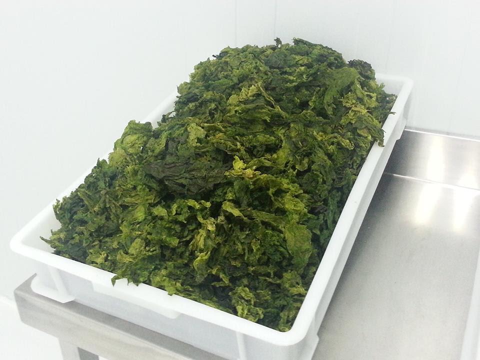Las algas deshidratadas se rehidratan en el momento de comer y se pueden preparar, por ejemplo, en ensalada.