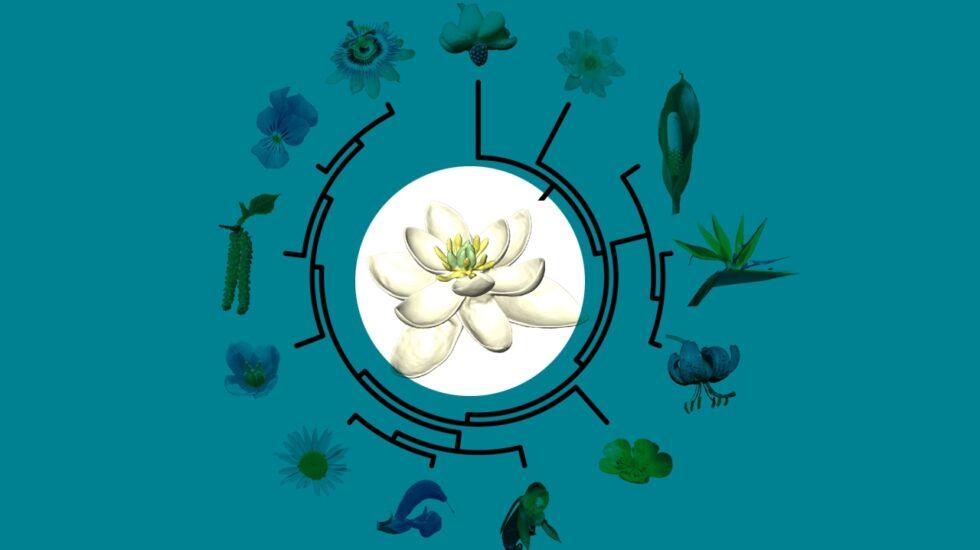 La flor de la que partieron las demás