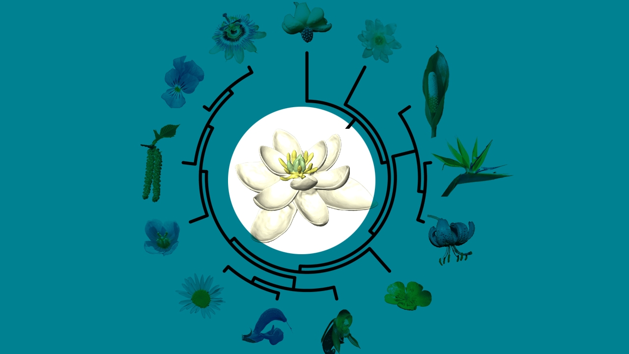 Reconstruyen El Aspecto De La Primera Flor