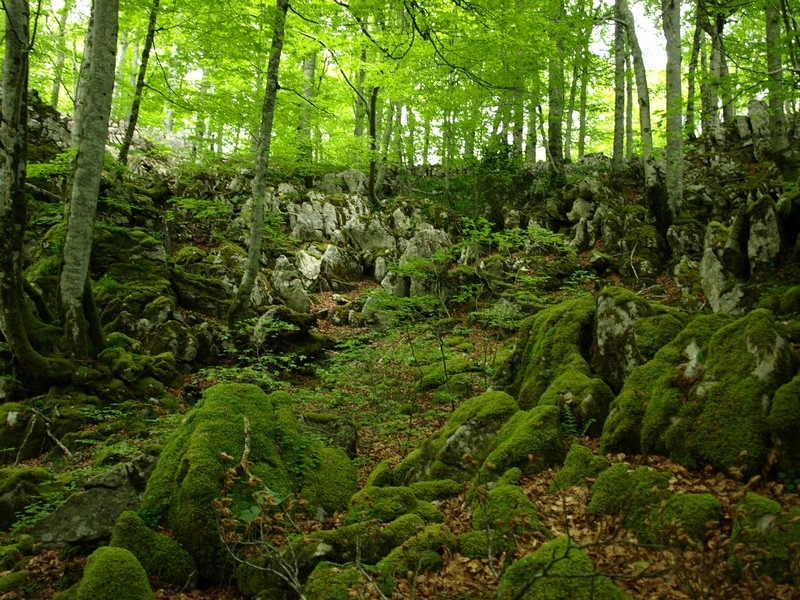 Hayas en la Selva de Irati, el mayor bosque de Europa