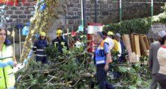 Momento del sinisestro en Madeira (Portugal), después de que cayera un árbol durante una romería religiosa.