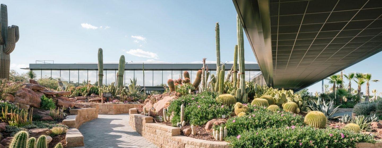 El jardín de cactus de Desert City