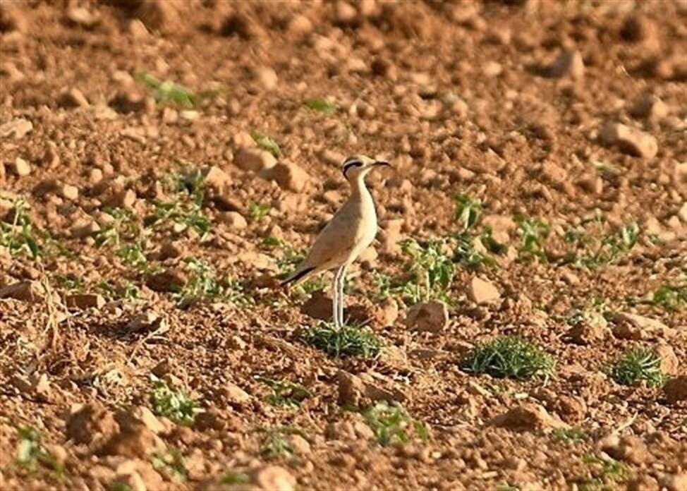 El corredor sahariano