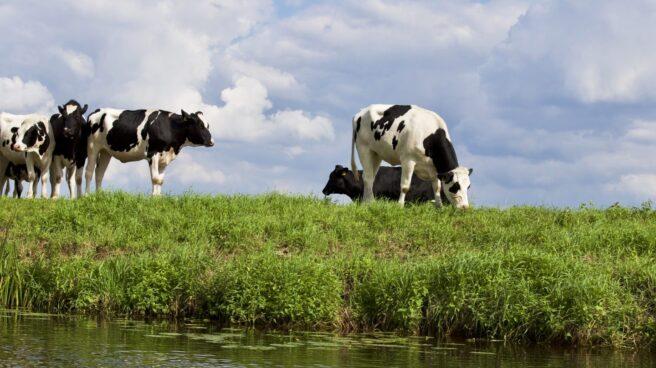 Rusia es el tercer mercado para el gigante agroalimentario francés.