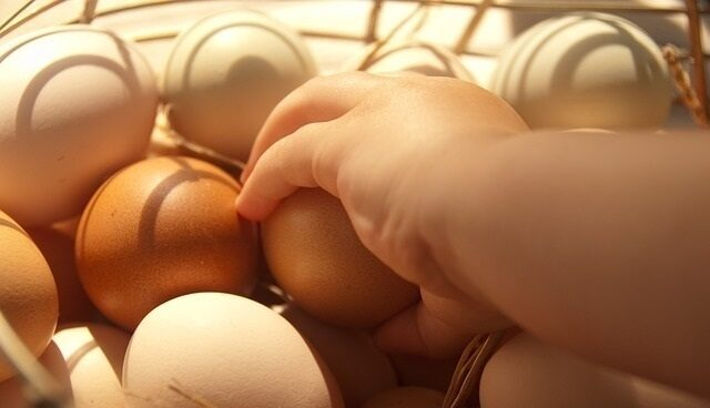 Huevos en una cesta, en una imagen de archivo.