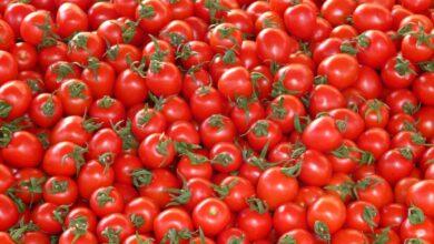 Descubren que un nuevo gen potencia el sabor del tomate