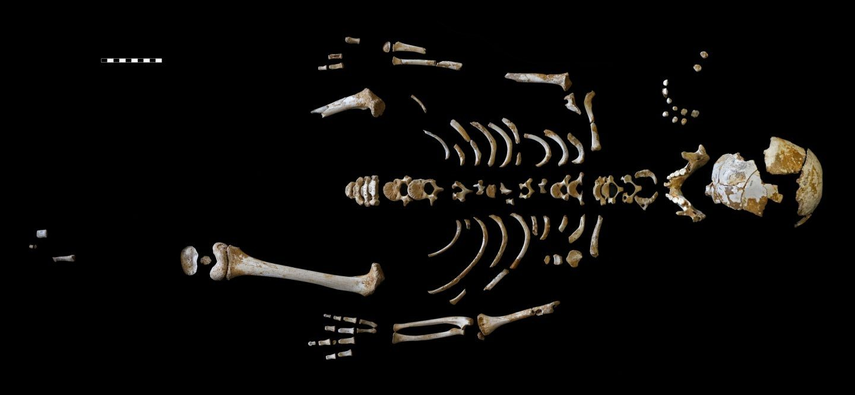Esqueleto del niño neandertal recuperado en la cueva de El Sidrón