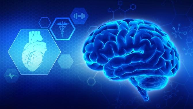 Investigaciones del cerebro