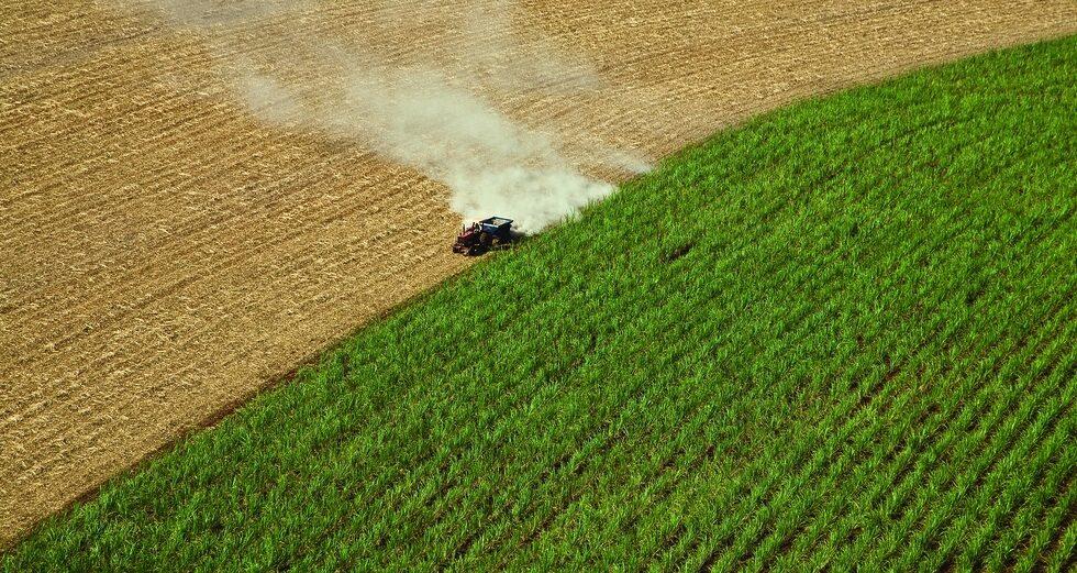 Cultivo de caña de azúcar para biocombustibles