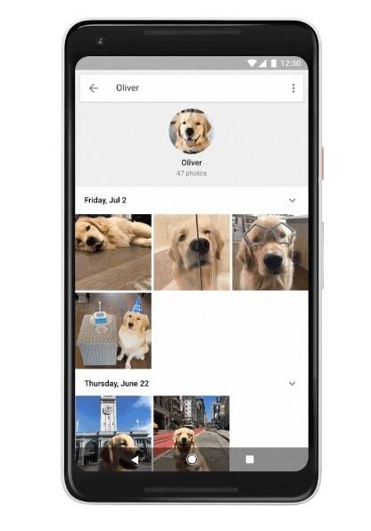Ejemplo de reconocimiento facial de un perro